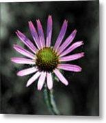 Tennessee Cone Flower Metal Print