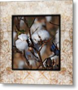 Tennessee Cotton II Photo Square Metal Print