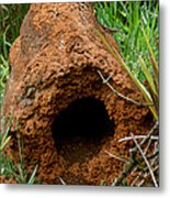 Termite Mound In Brazil Metal Print