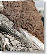 Termite Nest Metal Print