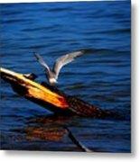 Tern Around Metal Print