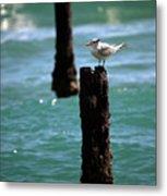 Tern Gulfstream Florida Metal Print