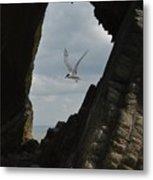 Tern Through The Gap Metal Print