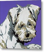 Terrier Mix Metal Print