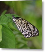 Terrific Capture Of A Paper Kite Butterfly On A Leaf Metal Print