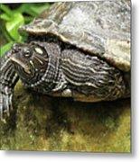 Tess The Map Turtle #2 Metal Print