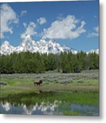 Teton Reflection With Buffalo Metal Print