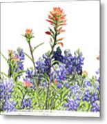 Texas Bluebonnets And Red Indian Paintbrushes Metal Print