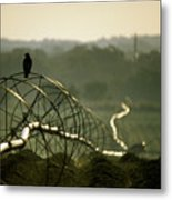 Texas Hawk Metal Print