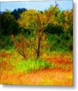 Texas Landscape 102310 Metal Print