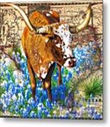 Texas Longhorn In Bluebonnets Metal Print