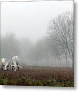 Texas Longhorns  Grazing On A Foggy Morning Metal Print
