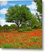 Texas Poppy Field 159 Metal Print