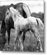 Texas Ranch  Metal Print