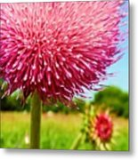 Texas Thistle 003 Metal Print