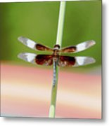 Texas Widow Skimmer - 10 Digitalart Metal Print