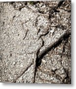 Texture With Root With Plenty Of Pebbles Metal Print