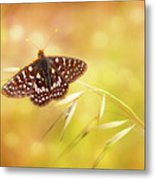 Textured Chalcedon Butterfly Metal Print
