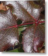 Textured Leaves Metal Print
