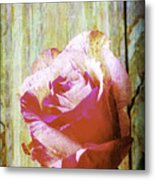 Textured Pink Red Rose Metal Print