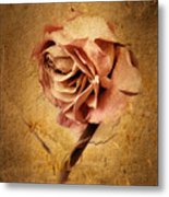 Textured Rose Metal Print