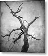Textured Tree Metal Print by Bernard Jaubert
