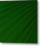 Texturized Palm Leaf Metal Print