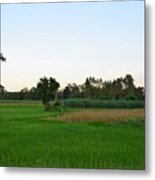 Thai Fields Metal Print