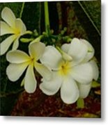 Thai Flowers II Metal Print
