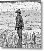 Thailand Rice Planter Metal Print