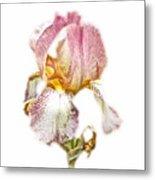 Thank You Greeting Items - Bearded Iris Metal Print