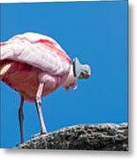That Disapproving Look Metal Print