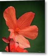 That Orange Flower Metal Print