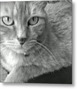 That Spotted Nose Metal Print