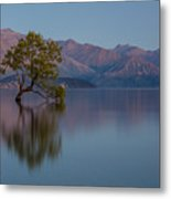 That Tree - Wanaka Metal Print