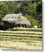 Thatched Shelter Metal Print