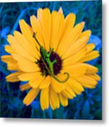 Imaginary Flower Metal Print