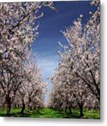 The Almond Bloom Metal Print