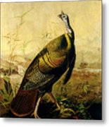 The American Wild Turkey Cock Metal Print