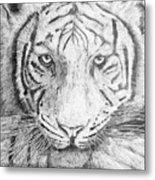 The Amur Tiger Metal Print