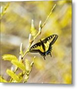 the Anise Swallowtail  feeding in the trees Metal Print