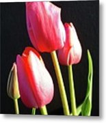 The Appearance Of Spring - Tulips Metal Print