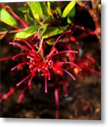 The Art Of Spider Flower Metal Print