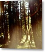 The Art Of The Forest Metal Print