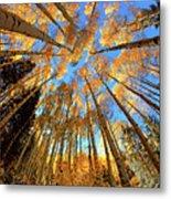 The Aspens Above - Colorful Colorado - Fall Metal Print