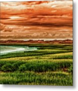 The Atlantic White Cedar Swamp Trail Metal Print