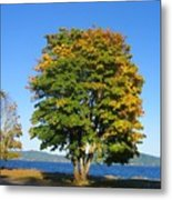The Autum Leaves Metal Print