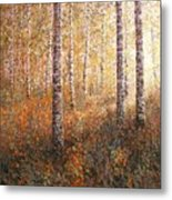 The Autumn Sun In The Birch Forest Metal Print