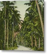 The Avenue Of Palms Guam Li Metal Print