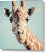 The Baby Giraffe Metal Print